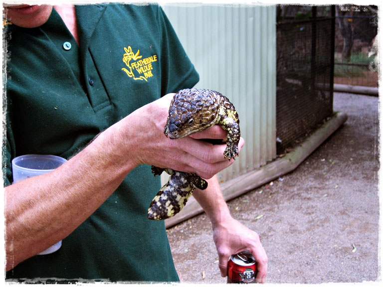 Сидней: Голубые горы и обнимашки с кенгуру в Fetherdale Wild Life Park