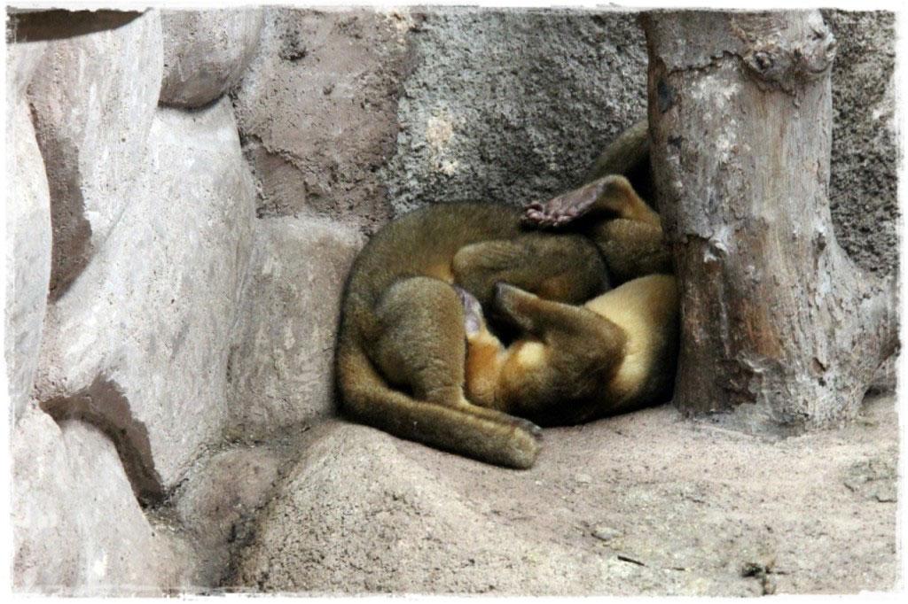Сингапурский зоопарк и единение с дикой природой