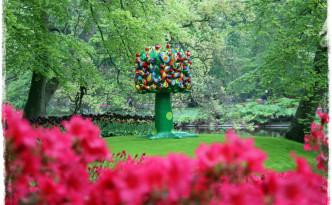 web_holland_tulips_0432