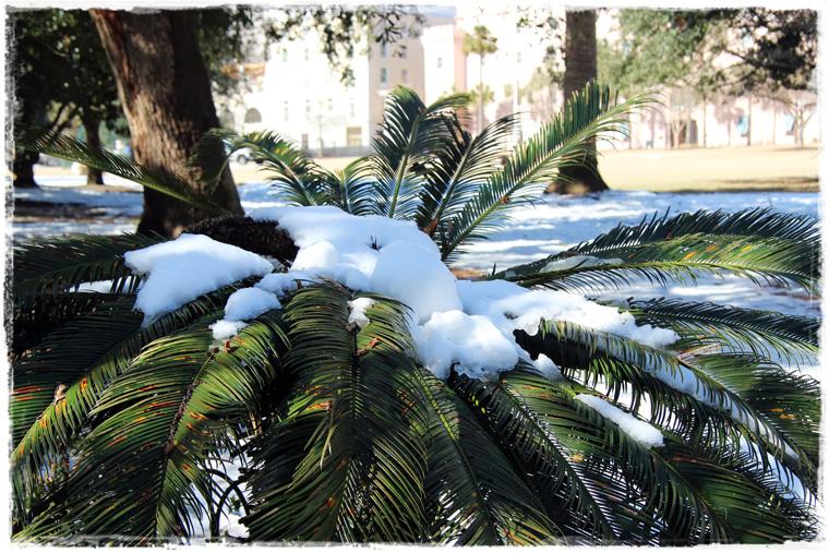 Южная Каролина. Вдохновляющий и снежный Чарльстон