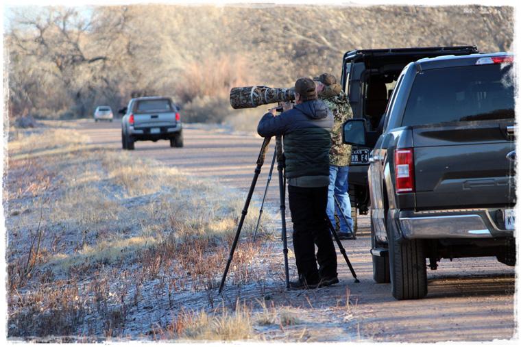 Нью-Мексико. Природный заповедник Bosque del Apache и сотни перелетных птиц