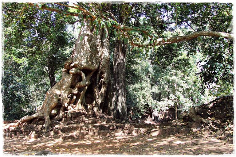 Ангкор Ват и неожиданное разочарование