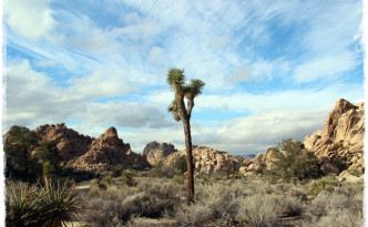 web_usa_joshuatree_3238